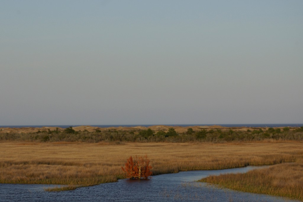 100413_MSABLOG_OUTERBANKS_07